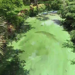 https://www.winknews.com/2018/08/30/algae-hurting-home-sales-in-cape-coral/